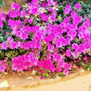 Blazing spring colors!