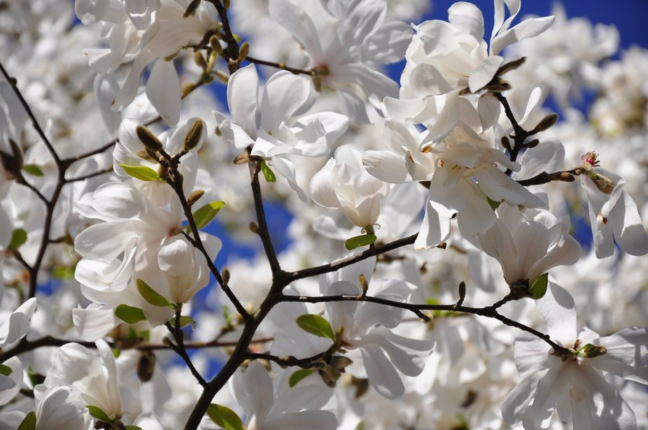 Blossom everywhere