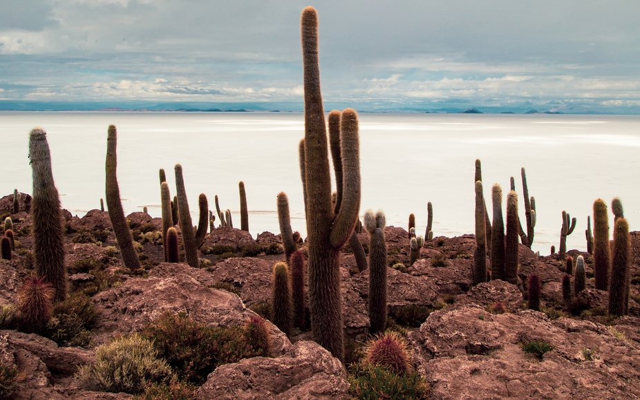photograph made on my trip to Uyuni, Bolivia. The place is called Isla de los Cactus located in t...