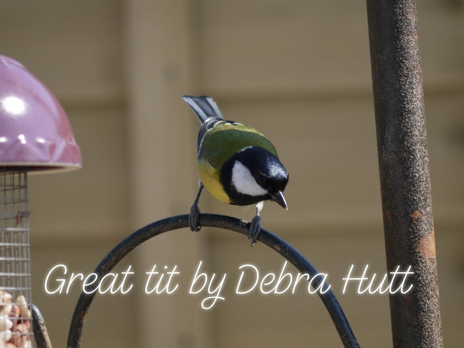 This little chap was feeding from my garden in Looe Cornwall UK