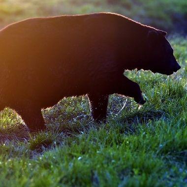 The Pungo Mational Wildlife Refuge in eastern NC is chock full of wonderful wildlife