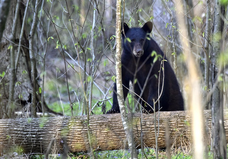 The Pungo National Wildlife Refuge in eastern NC is chock full of wonderful wildlife. It&#039...