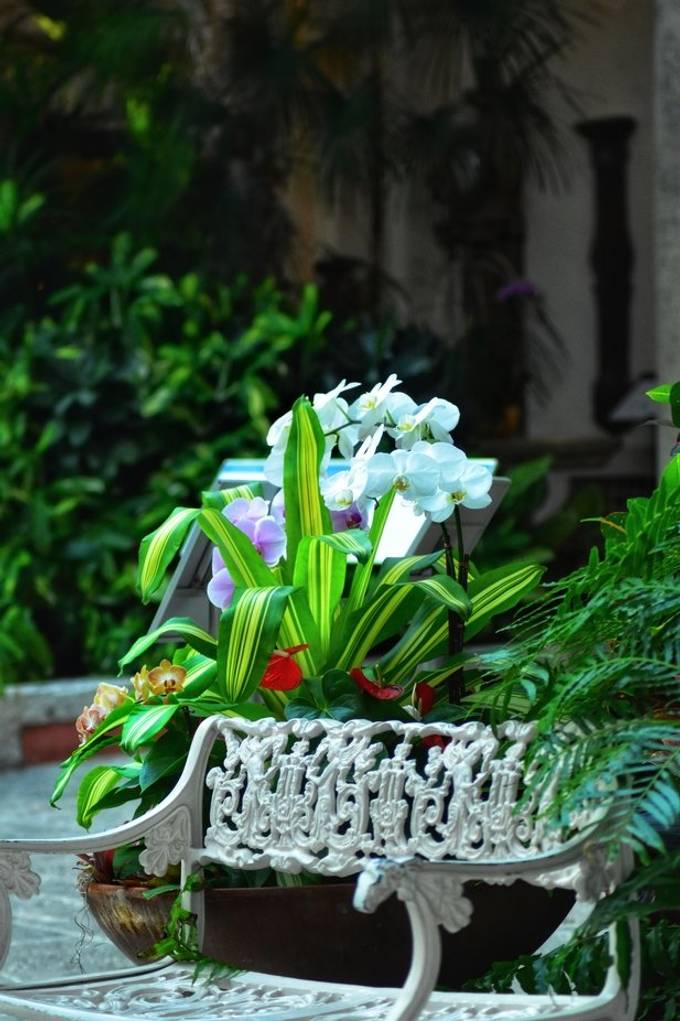 Beautiful orchids at Vizcaya Gardens