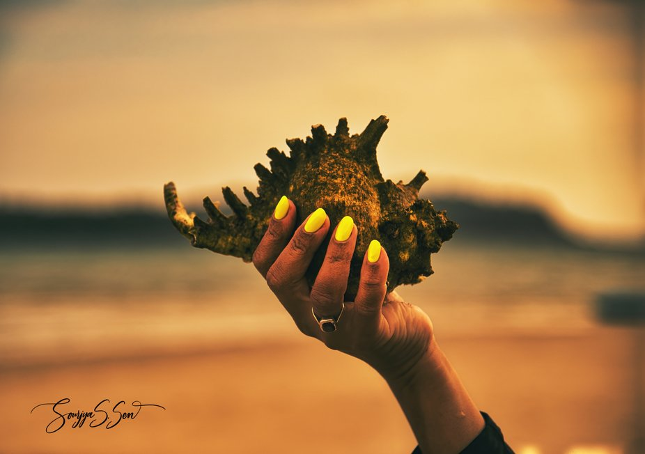 """""""Seashells are proof that nothing is ever really empty. The rush of the immortal wind wh..."""