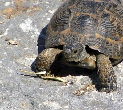 Turtle in Turkey