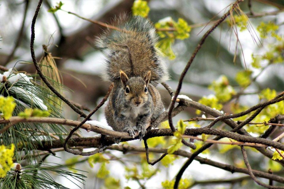 My Friend Squirrel!