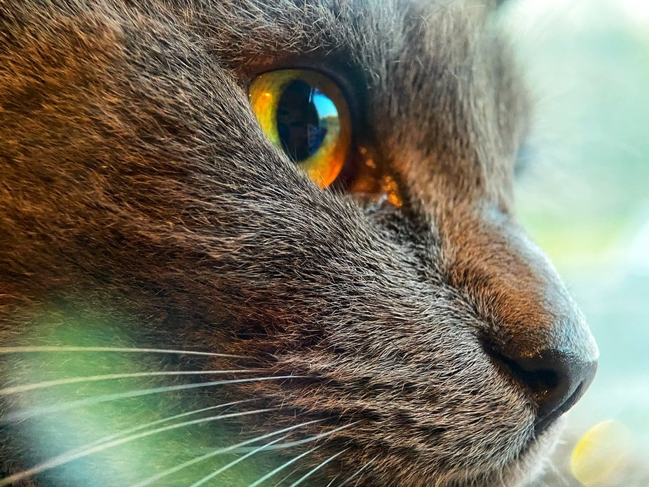 This is buster one of 3 cats in my house, he was sat watching the birds out the window in front o...