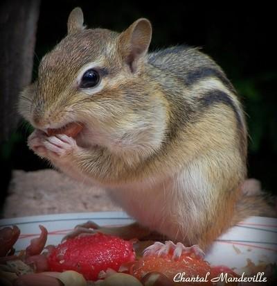 The Hungry Animal