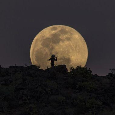 Predator and full moon