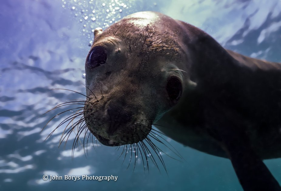 Sea Lion colony, La Paz, MX. #cortezclub #losislotes #johnborysphotography #nauticamhousings