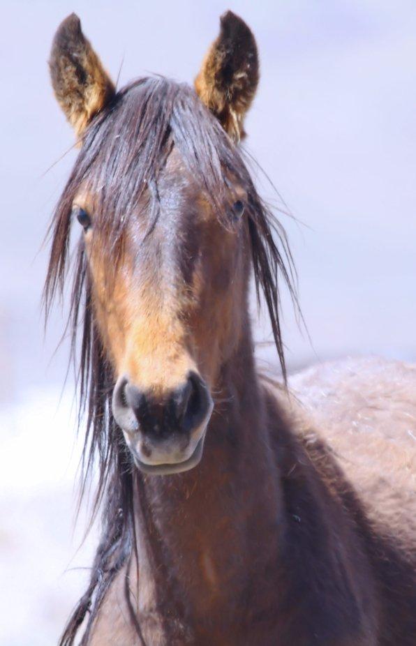 Wild Horse Band near Reno, NV
