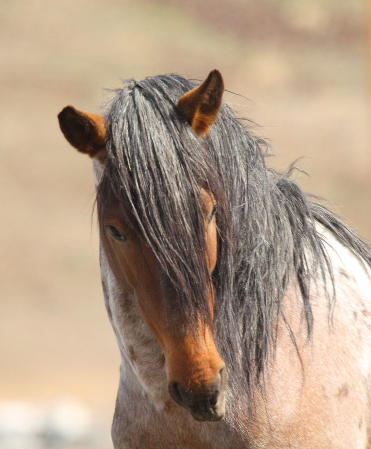 I was slowly walking up on this wild horse and he suddenly turned and gave me this look