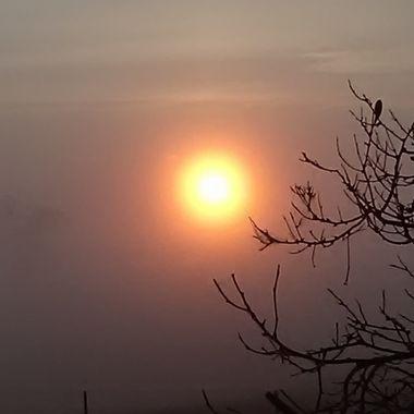 Sun trying to poke through the fog