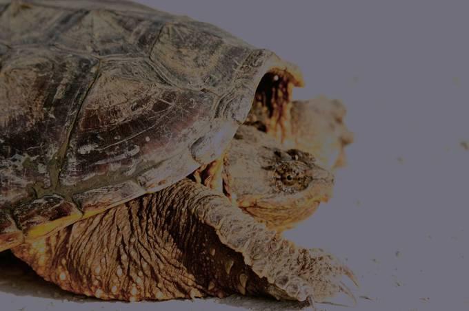 TurtleHeadshot_HDR1991