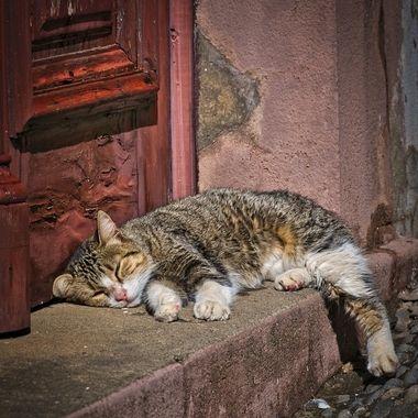 sleeping street cat...