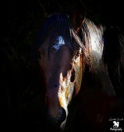 Portrait of a Wild Stallion