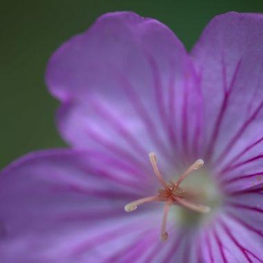 Macro shot of flower center