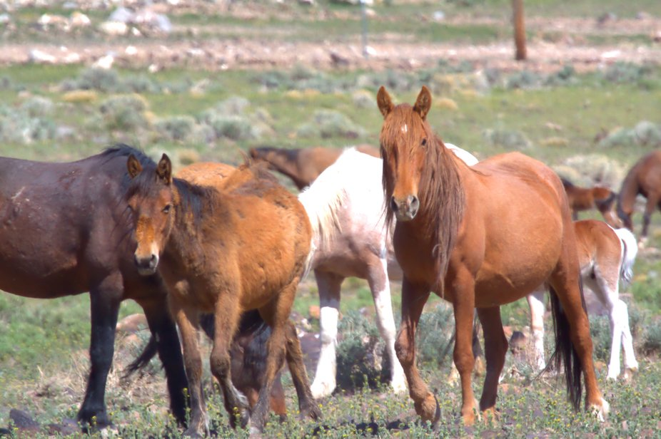 Any time I made a move towards the little colt at least one of them would get between me and the colt.
