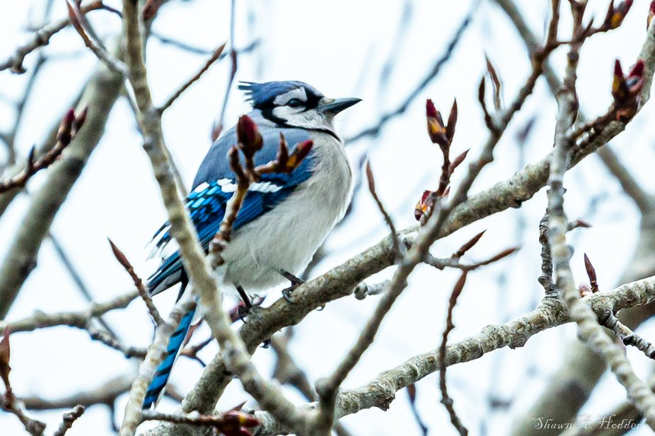 Sitting on our Cherry tree