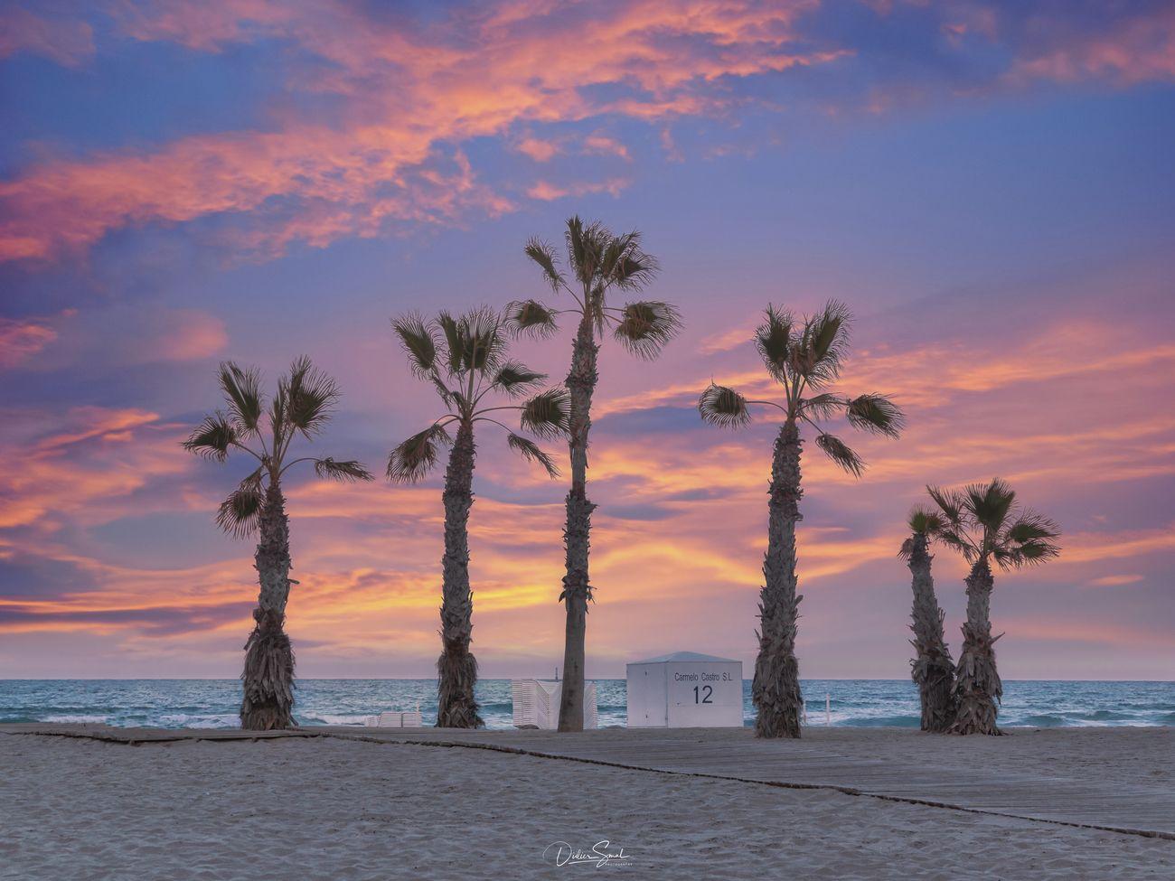 Palm Trees Beauty Photo Contest Winner