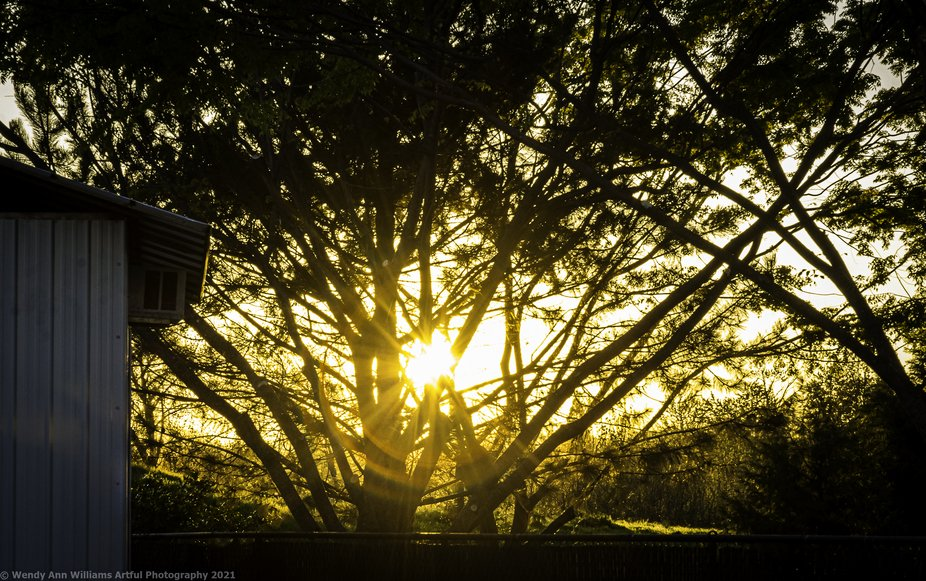 The way the sun setting behind the trees with its brilliant lighting caught my attention and I ha...