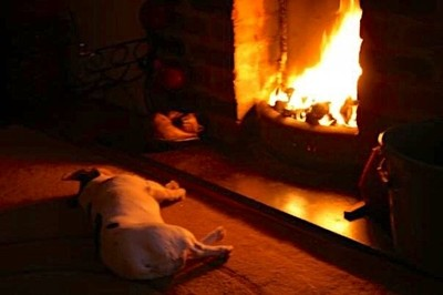 """Our little Jack Russel """"Taz """" no long with us but always in our heart !"""