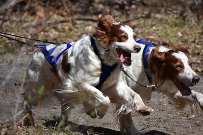 DSC_0054_6 sled dogs