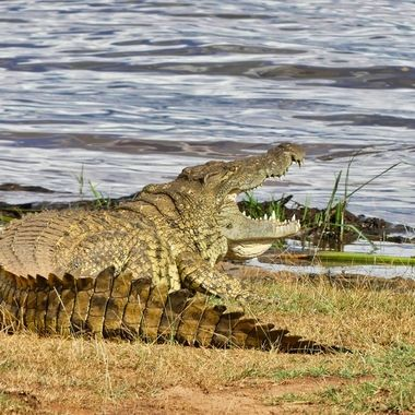 Pic was taken in Akagera National Park on Lake Ihema