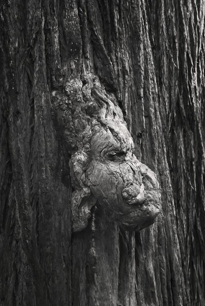 Tree Spirit.