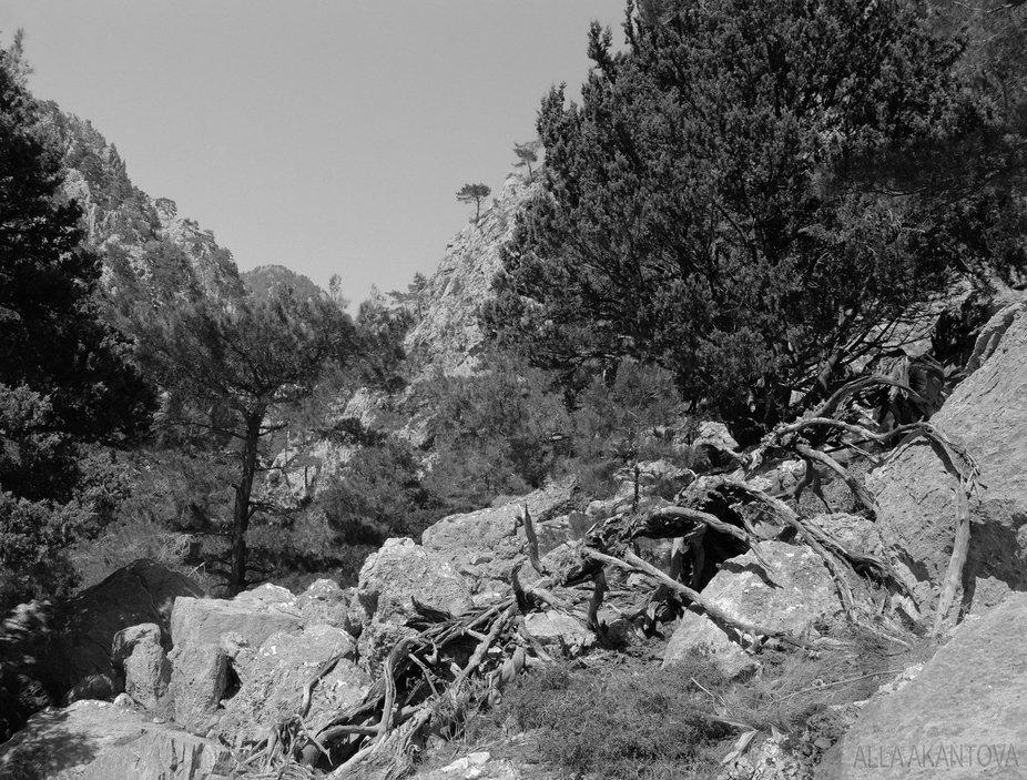 Gorge, Summer