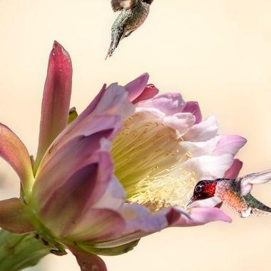 Hummingbirds and flowers