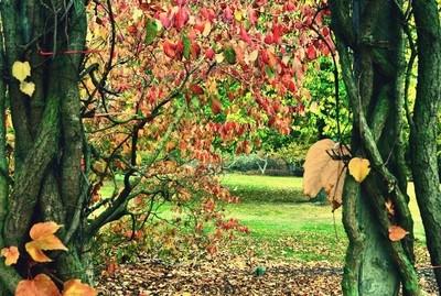Autumn tangled Frame