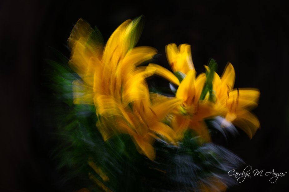Experimenting with In camera intentional movement.