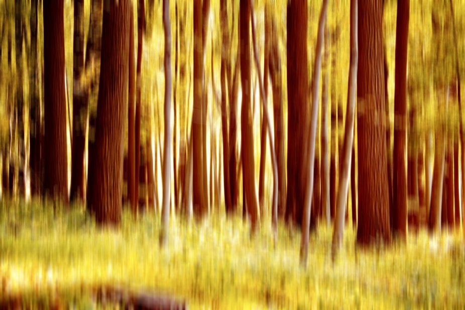 This is a result of a  short hike in the woods and then created a motion blur. Originally shot on...