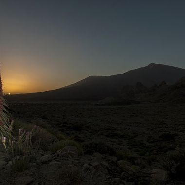 Endemic plant from the hightest peak in the Island of Tenerife (Spain)