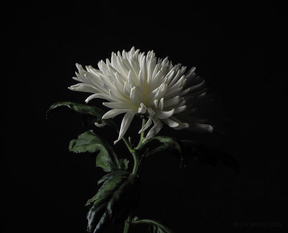 Flower_c