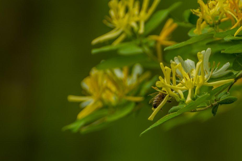 Bee enjoying flower