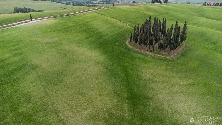 The cypresses of San Quirico D'Orcia