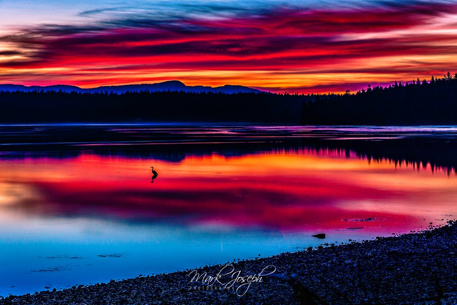 Seascape scene on a beach at sunrise with a heron in mid ground water and a colorful sky above an...