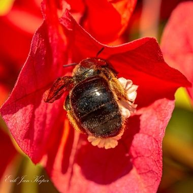 When you like flowers, there are always insekts around the flowers