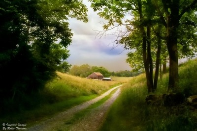A walk to the barn