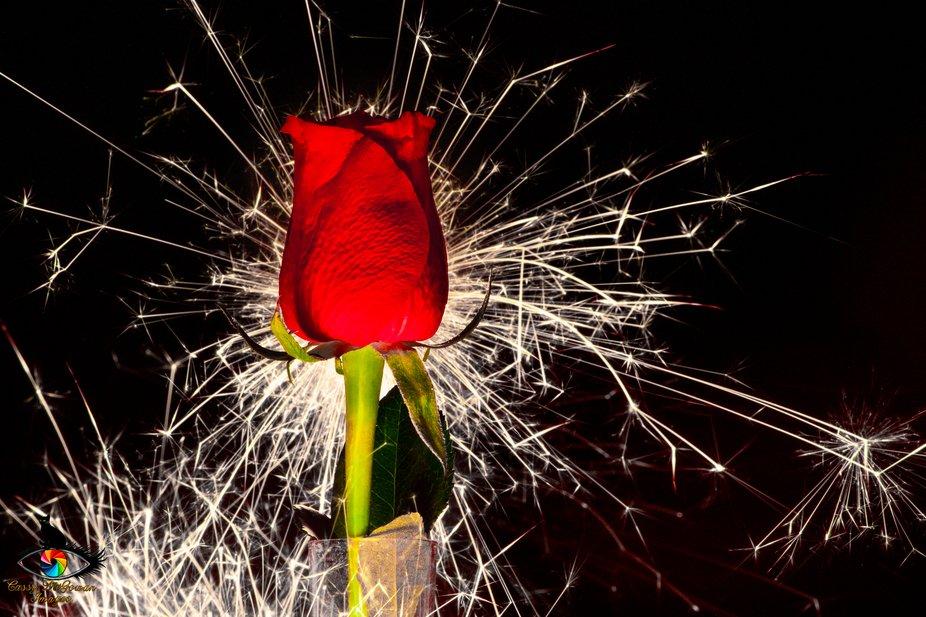 Rose sparkler