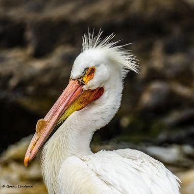 This bird definitely has it!
