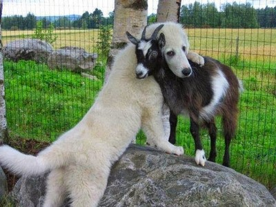 The love that all animals have & give!