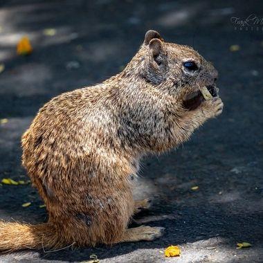Squirrel in Zoo Phoenix