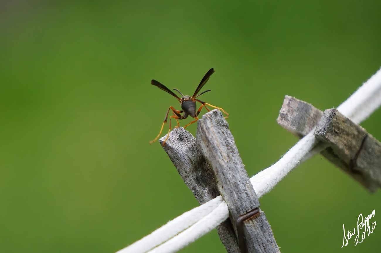 Wasp getting ready for flight. this is Pic 1 of 3.