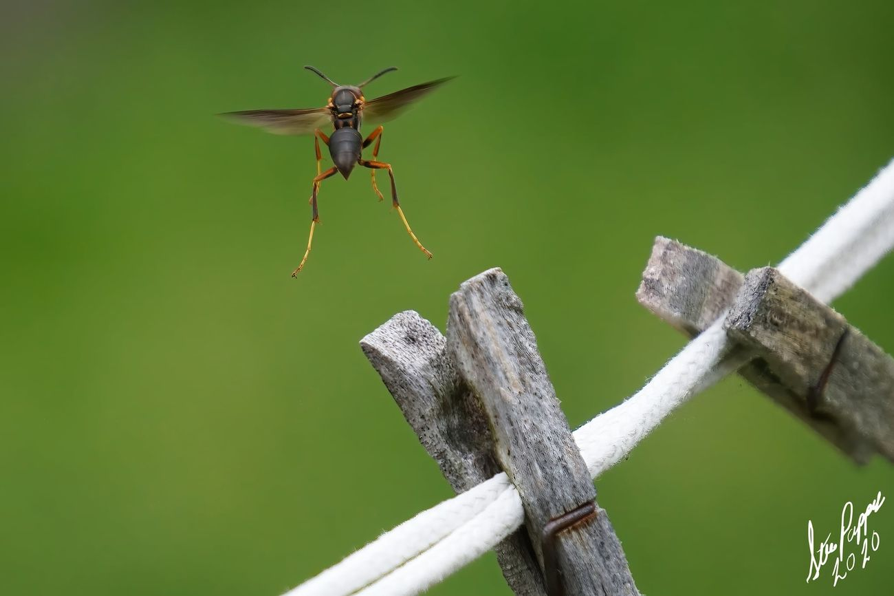 Wasp taking flight Pic 3 of 3