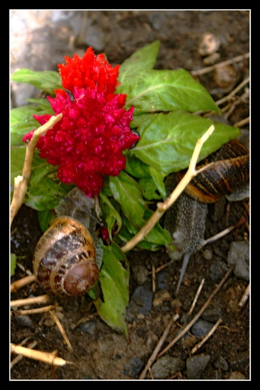 snails After a long drought and now a lot of rain, these snails are coming out en masse Theo-Herbots-Photography