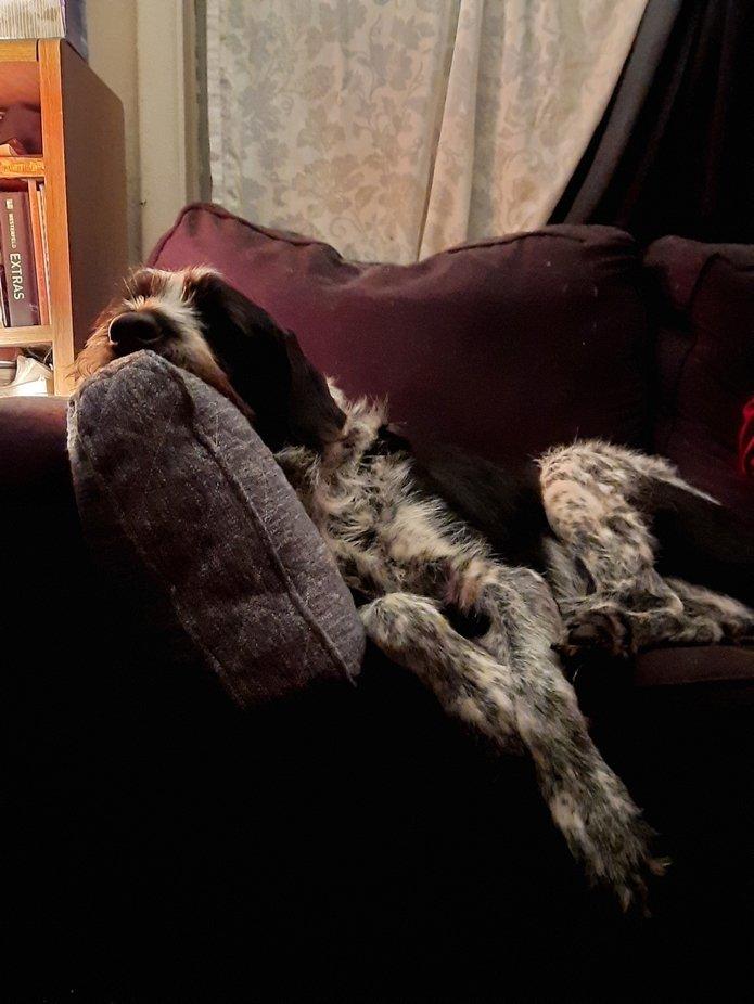 Zazu sleeping in his favorite spot