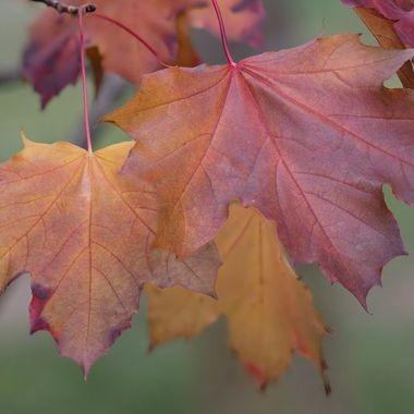 Subtle Leaves